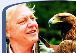 Eagles are big.