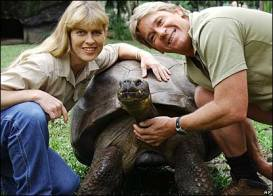 irwin-turtle.jpg